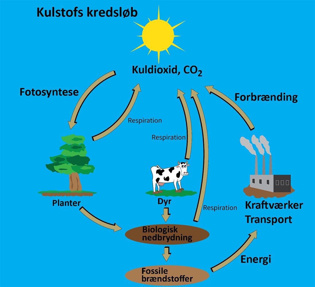 Kulstofs kredsløb