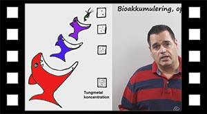 Tungmetallers bioakkumulering