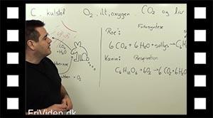 Kredsløb, kulstof og ilt (oxygen)